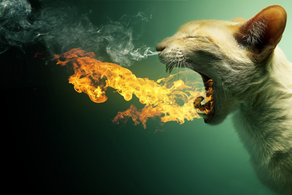 Cat fire and smoke pairs of teeth a cat on fire fall